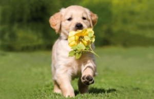 cute-puppy-running-spring-dog-341x220